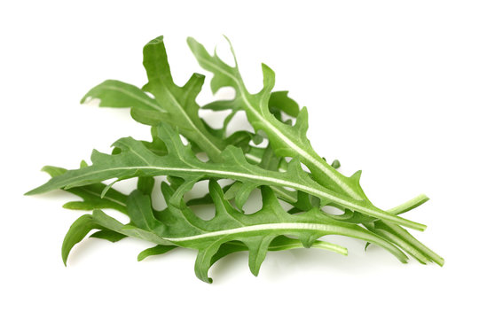 Ruccola leaves in closeup