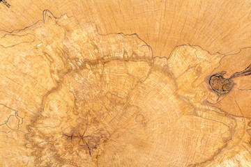 Log of wood texture