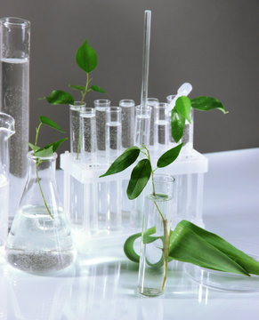 Test tubes with plant on gray background