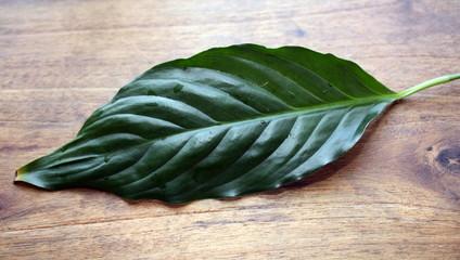 feuille de spatiphyllum