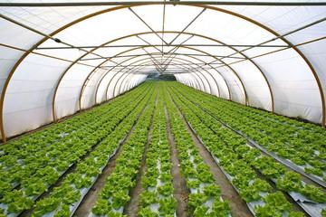 invernadero agricultura 3565f