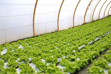 invernadero agricultura 3504f