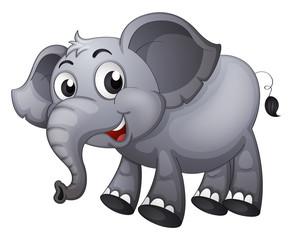 A gray elephant