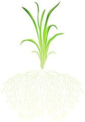A green grass