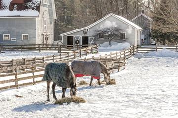 Horses dine on hay in .Ballston Spa, New York.