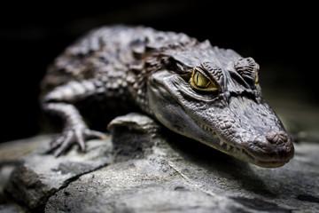Garden Poster Crocodile Krokodilkaiman