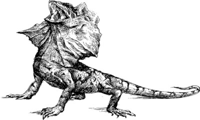 Hand drawn basilisk lizard