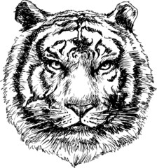 Tiger head hand drawn