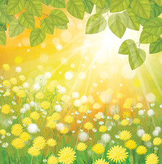 Vector of sunny background with dandelions and green leaves.