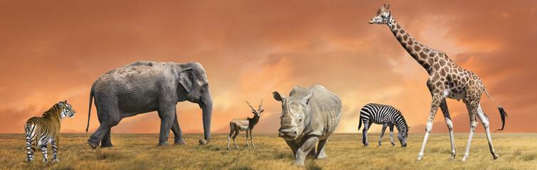 Wild savanna animals collection