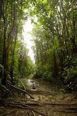 Tropical rainforest floor