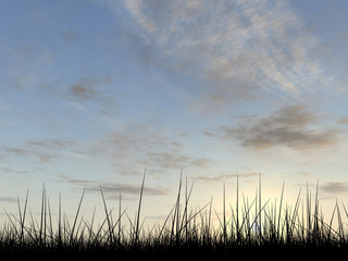 Conceptual grass silhouette at sunset