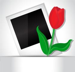 Photo and tulip