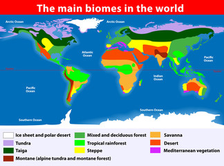 The main biomes in the world Wall mural
