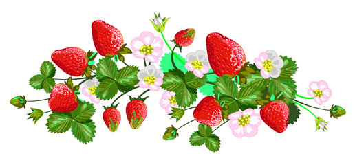 Vector isolated strawberries