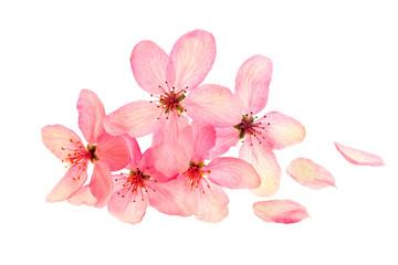 Bloom apple-tree flowers