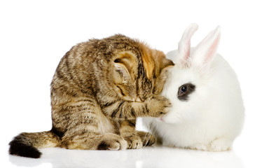 kitten and rabbit together. isolated on white