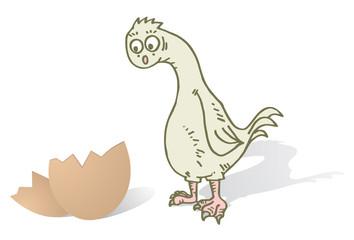 Suprised chicken