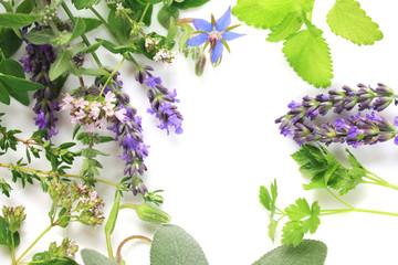 Wall Mural - Fresh herbs border