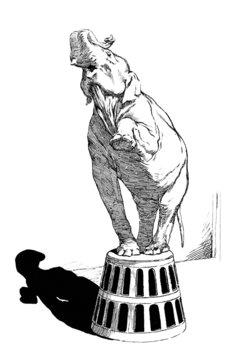 Circus Elephant : Acrobat