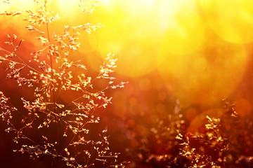 Deurstickers Kersenbloesem Field of grass at sunset