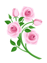 Pink roses, buds and leaves. Vector illustration.