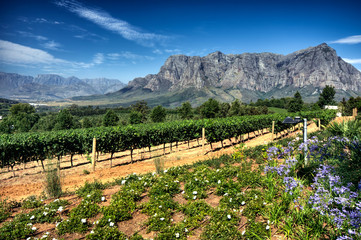 Photo on textile frame South Africa Vineyard in stellenbosch, South Africa