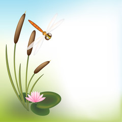 Dragonfly reedmace water lily background