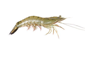 shrimp isolated