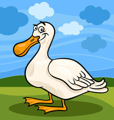 duck bird farm animal cartoon illustration