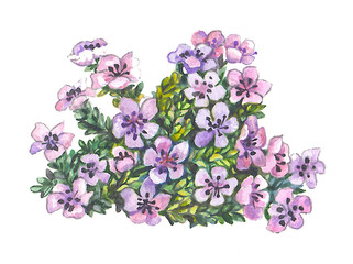 Beautiful small flowers of violet color