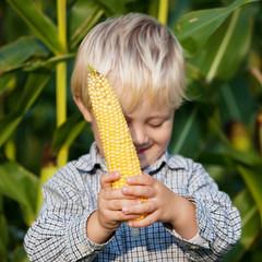 kleiner junge im maisfeld