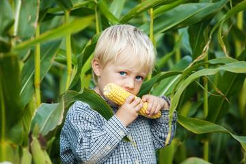 kleiner junge isst maiskolben