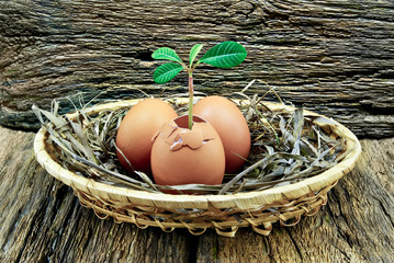 The plant inside the eggs in a basket on the wooden background