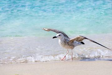Sea gull at the beach