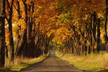 Fototapeta Droga jesienią.