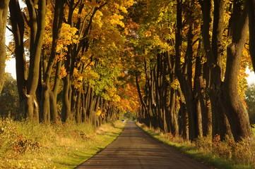 Droga jesienią.