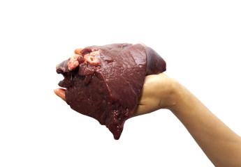 fresh liver in hand background