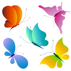 Printed kitchen splashbacks Butterflies butterfly,butterflies vector