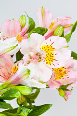 flowers bunch from white and pink alstroemeria