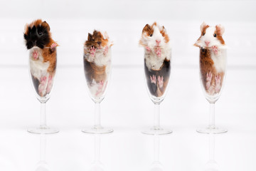 Four hamster in a glass