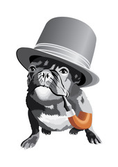 Bulldog head with hat