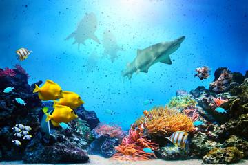 Obraz Podwodna scena. Rafa koralowa, grupy ryb, rekiny - fototapety do salonu