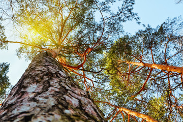 Foto op Plexiglas Aan het plafond sun's rays make their way through the branches