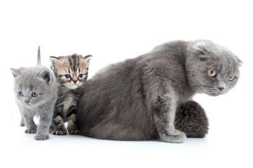 family portrait of Scottish fold cats