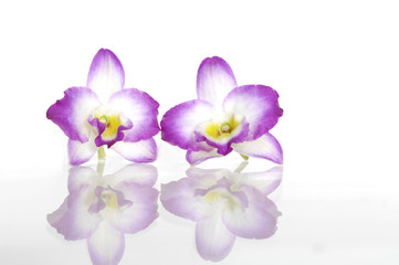 Two orchid flowers reflection (with clipping path)