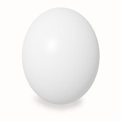 white large chicken egg