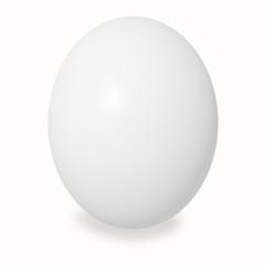white large chicken egg