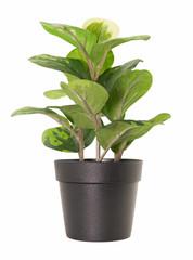 Isolate plant