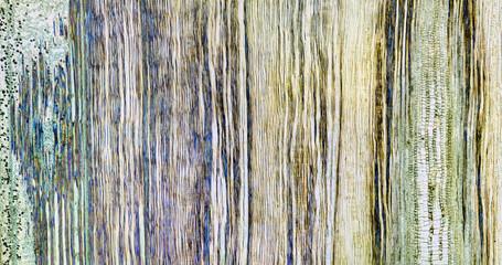 Cut of a leaf linden